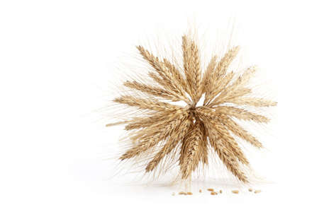 Barley ears isolated on white background Stock Photo