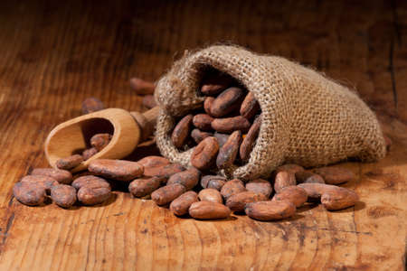 Raw cocoa beans in a burlap bag and scoop on a wooden table. Shallow depth of field.