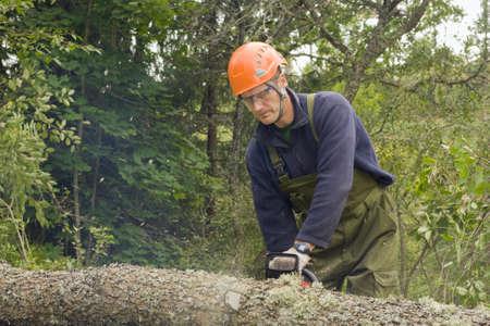チェーンソーで倒れた木を切る 写真素材 - 18190603