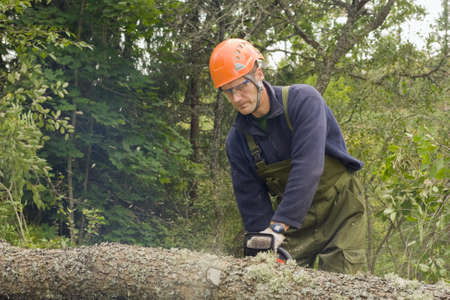 Cutting up a fallen tree with a chainsaw Stock Photo