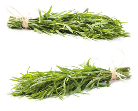 tarragon: Fresh tarragon herb bunch isolated on white background