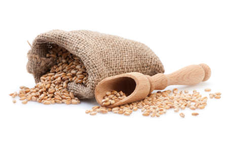 Seed in small burlap sack and wood scoop  Stock Photo