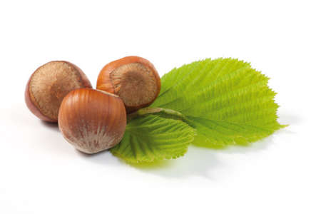 Hazelnut and leaf on white background  Shallow depth of field