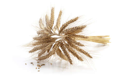 Barley ears isolated on white background Stock Photo - 18332448
