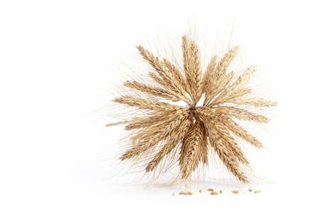Barley ears isolated on white background Stock Photo - 18332742