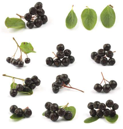 Various Black chokeberry bunch (Aronia melanocarpa) close up. Stock Photo