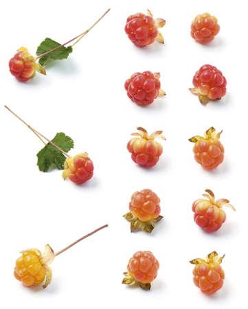 chicouté: Divers cloudberries sauvages isolés sur fond blanc fruit Arctique
