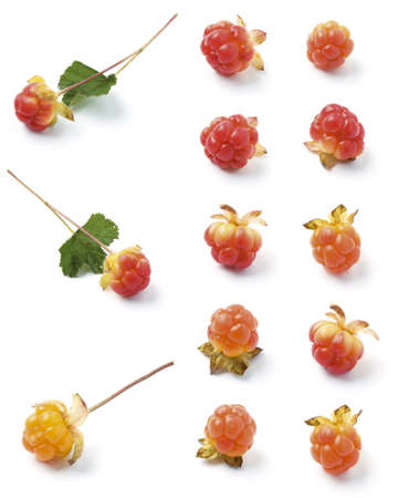 Various wild cloudberries isolated on white background  Arctic fruit