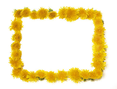 in need of space: dandelion frame with space for text or what you need...