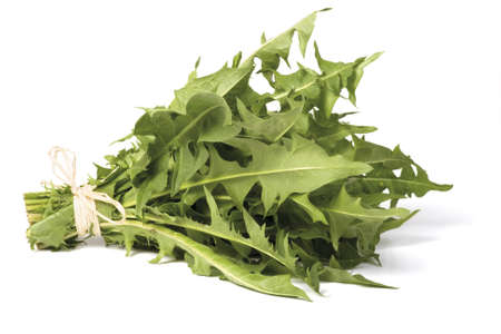 A bunch of fresh dandelion greens, isolated on white.