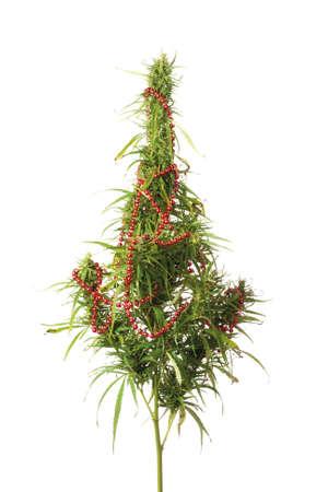 大麻大麻小枝は白い背景の上のクリスマス ツリーのような装飾。 写真素材