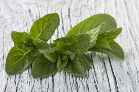 field mint: Mint leaves on a white table. Closeup. Shallow depth of field.