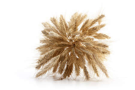 Rye ears isolated on white background Stock Photo - 18332788