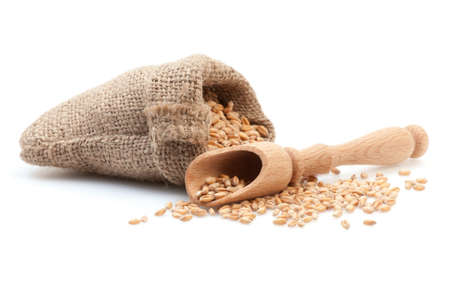 Grains in small burlap sack and wood scoop isolated on white background.