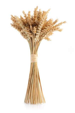 熟した小麦の白い背景で隔離の束