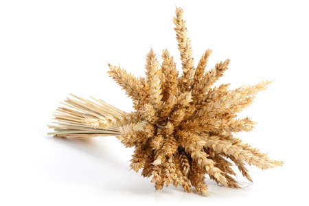 Sheaf of ripe wheat isolated on white background Stock Photo - 18332720