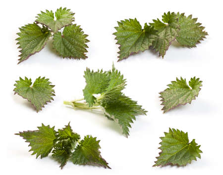 Close-up of nettle leaves isolated on white. Stock Photo
