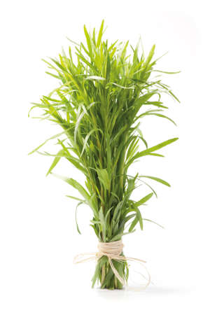 Fresh tarragon herb bunch isolated on white background. photo