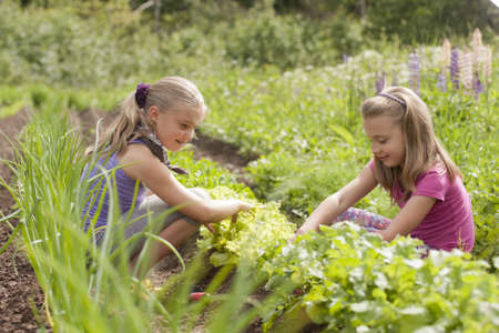 A pretty two sister  age 7 and 9  with garden tools pulling weeds out of the vegetable garden