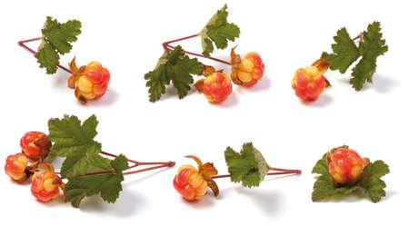 chicout�: Divers chicout� sauvage m�r sur la tige avec des feuilles. isol� sur fond blanc. Arctic fruit.Rubus chamaemorus.