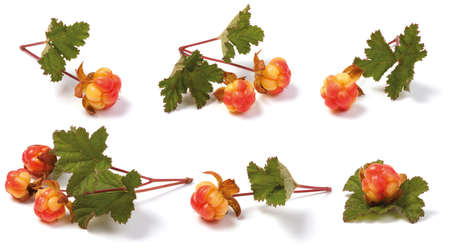 Various wild ripe cloudberry on the stem with leaves. isolated on white background. Arctic fruit.Rubus chamaemorus. Stock Photo