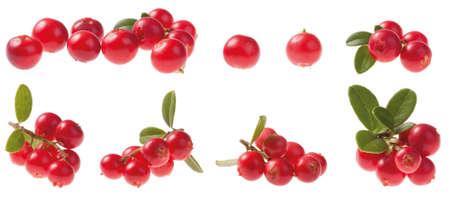 Various Cowberry (lingonberry) isolated on white background. Vaccinium vitis-idaea. Stock Photo