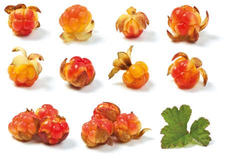 """chicouté: Diverses mûres sauvages isolé sur fond blanc. """"Rubus chamaemorus"""". Banque d'images"""