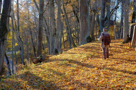 Young man tourist walking in the autumn forest. photo
