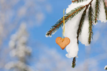 Snow-covered fir branches decorated with Heart-shaped gingerbread photo