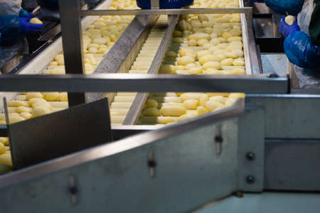 starchy food: Potatoes being processed and washed