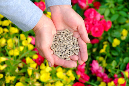 Hands with the granular fertilizer on the blooming garden in the background