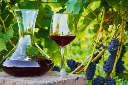 wine decanter and glass with red wine in vineyard