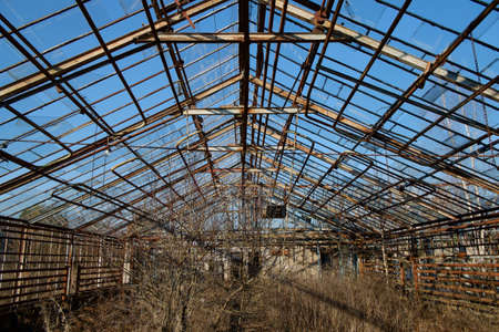 healed: old abandoned greenhouse healed with trees and damaged roofs