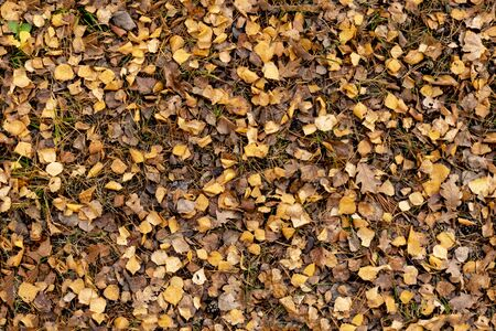 autumn brown leaves on the ground top view Stockfoto