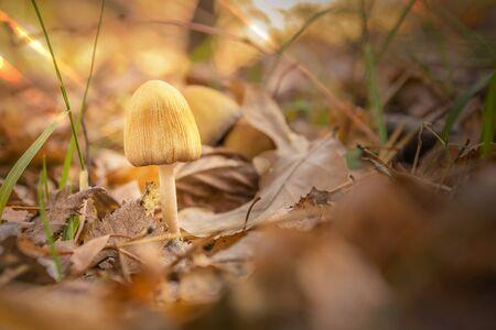 mushroom autumn brown foliage close up Stock Photo