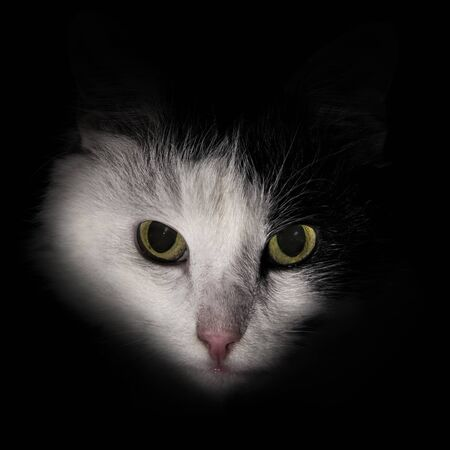 the face of a cat in the dark white black Stock Photo
