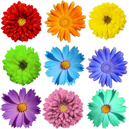 many color isolated colors red orange yellow green blue light blue purple pink turquoise