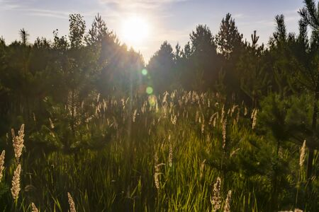 the grass glows in the rays outdoor wild background