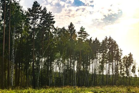 forest on the outskirts of the clearing