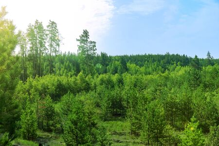 forest landscape, summer, blue sky with clouds Stockfoto