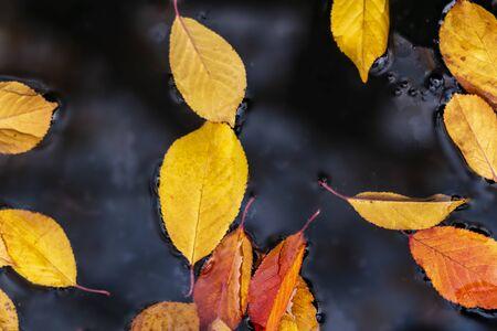 autumn leaves on the water Stockfoto