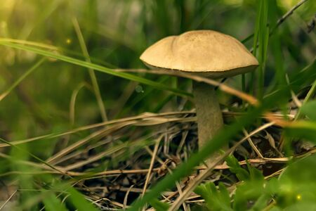 the fungus grows in the grass