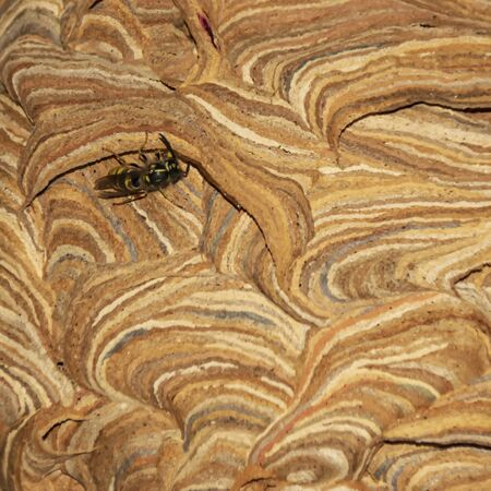 unusual abstract texture wasp hive spherical nest colored stripes