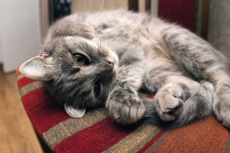 arouse: Cat is waking up Stock Photo