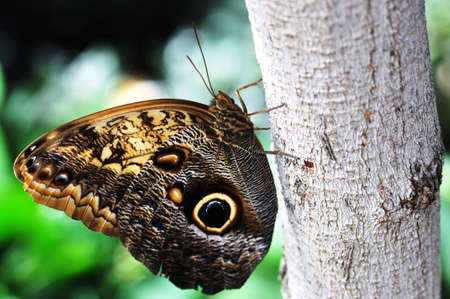 Beautiful butterfly filled with drawings on the stem of a tree Stock Photo