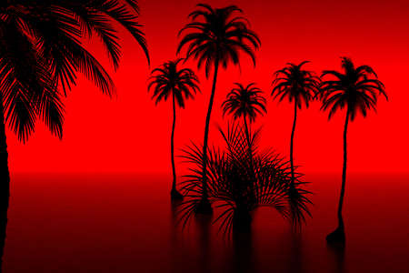 palmtree: 3d model palm-tree and sunset. made in 3ds max