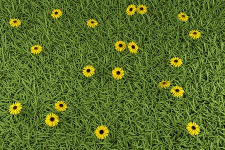 labranza: Grass y camomiles en el campo Foto de archivo