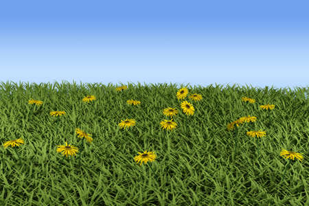 tillage: Grass y camomiles en el campo. modelo 3D  Foto de archivo