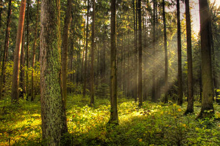 Magic light in dark forest Stock Photo
