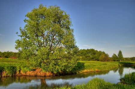 Tree on the riverside. River and meadow. Landscape nature